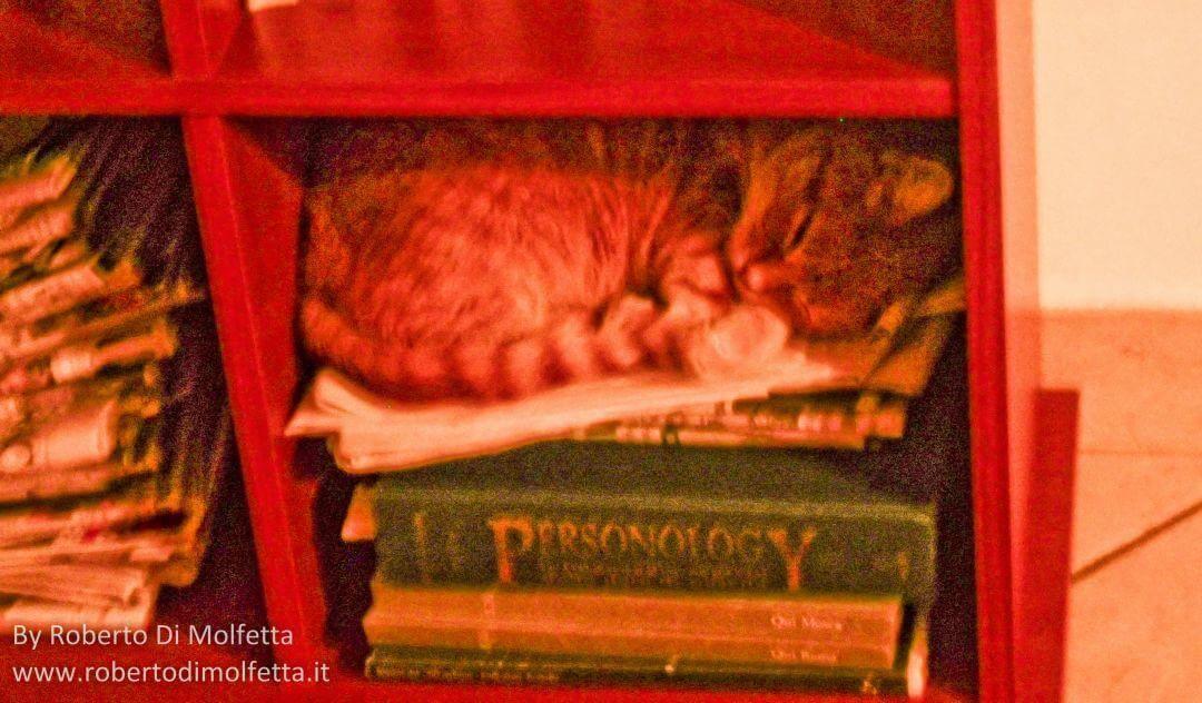 Gatto Briciola che dorme